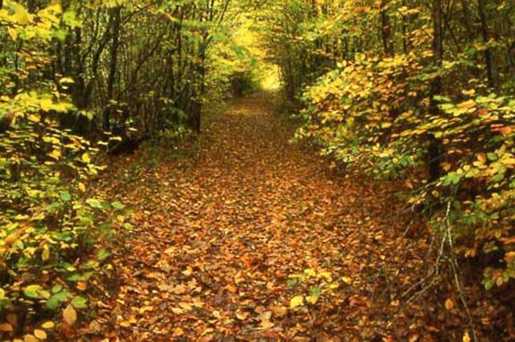 Ekim, Yenilenmenin Ve Yenilemenin, Yeşermenin Ve Yeşertmenin Ayı